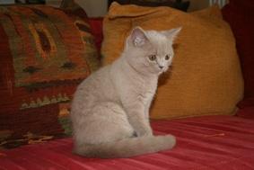 Chatterie des Poussy Cat